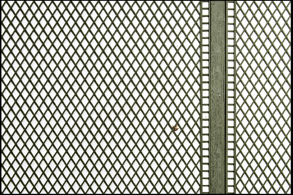 Gevangen blad